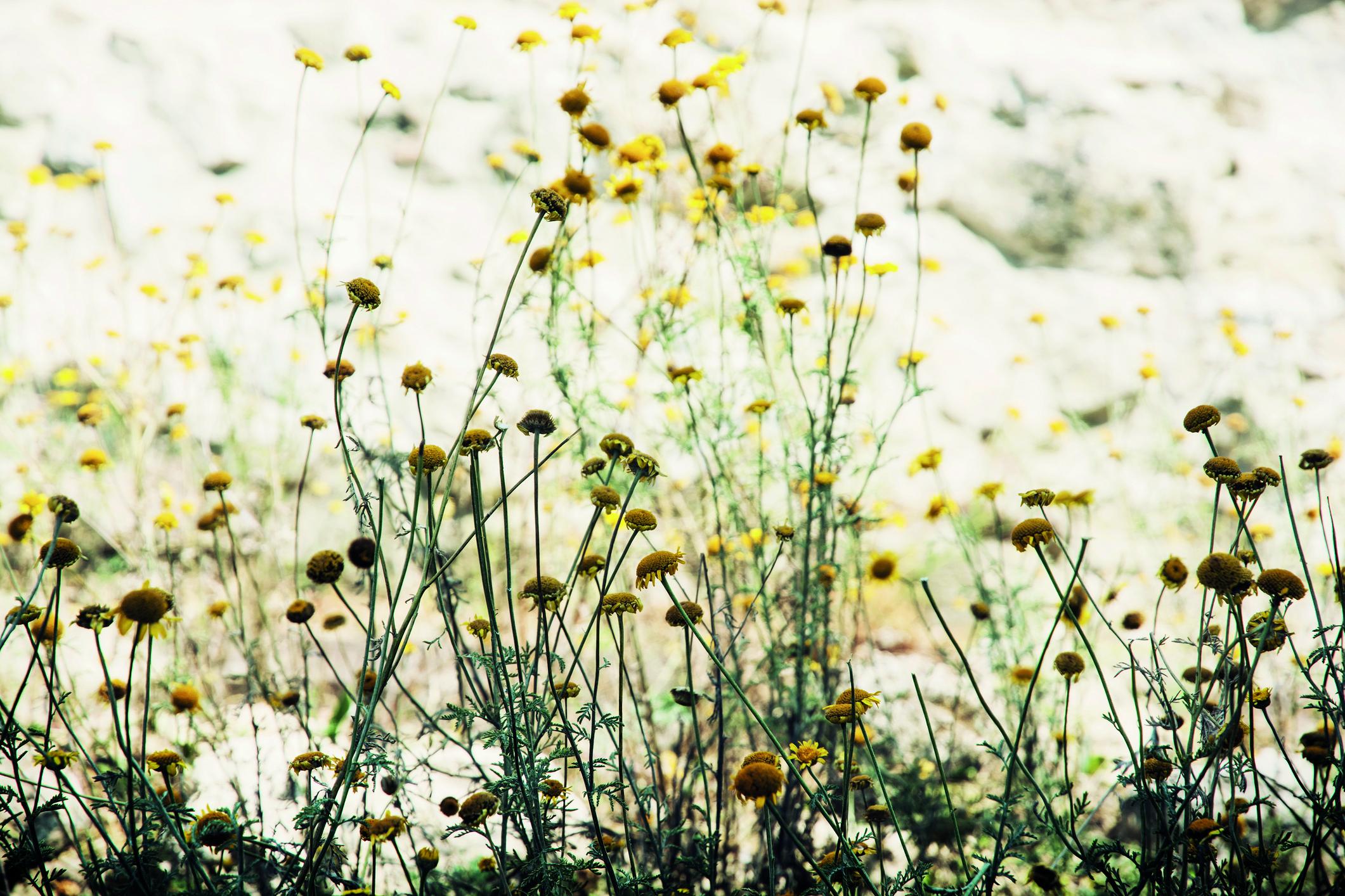 3 16 De Maag En De Vier Natuurkwaliteiten