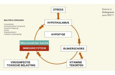 verstoord immuunsysteem