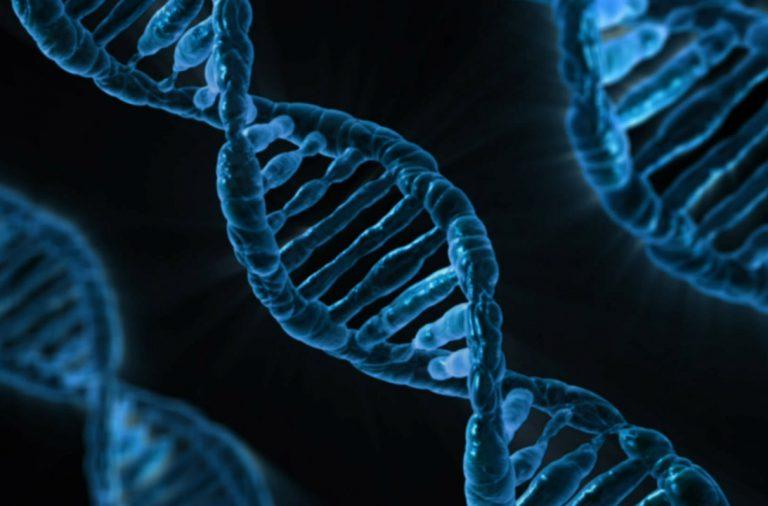 DNA-analyses
