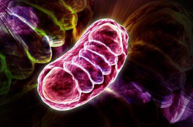 Mitochondriale disfunctie