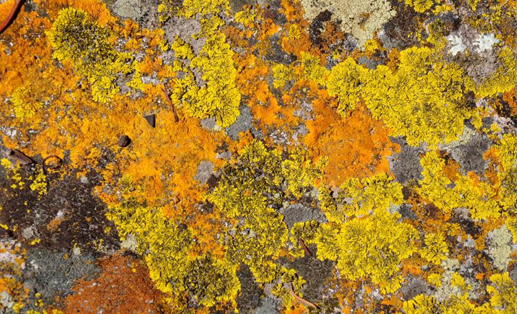 Mucosale lichen planus